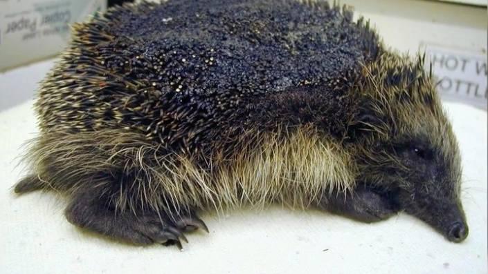 Tierschutz: Dieses Bild zeigt, warum man ein Lagerfeuer erst kurz vor dem Anzünden vorbereiten sollte
