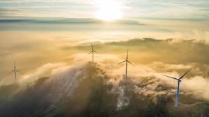 Die Auswirkungen von Windparks auf die Ökosysteme kann derzeit noch nicht abgeschätzt werden (Symbolfoto)