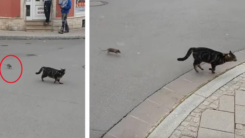 Spieß umgedreht: Jäger wird zum Gejagten: Das hatte sich diese Katze anders vorgestellt