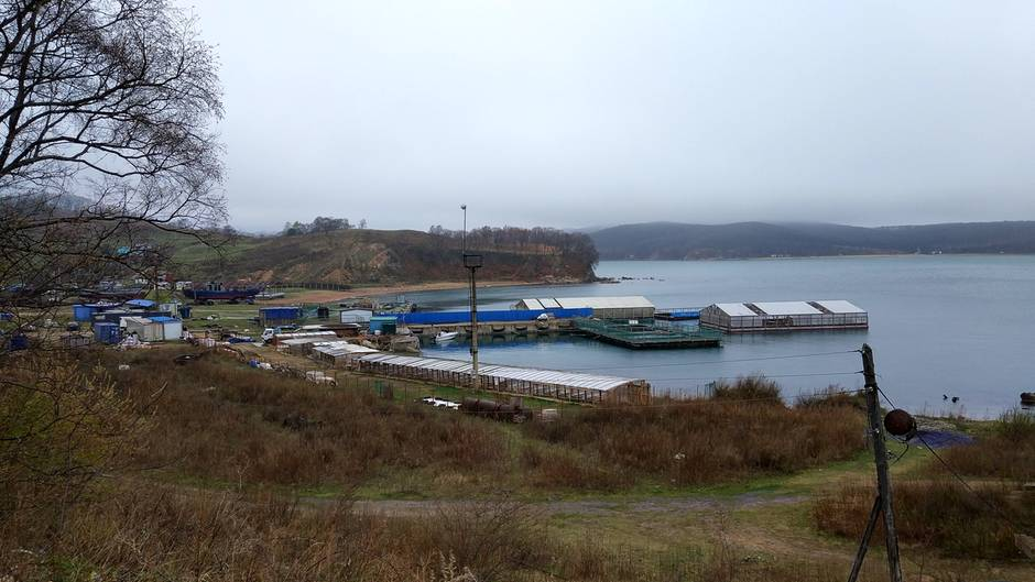 Russland, Nakhodka: In der Bucht werden nach Darstellung von Tierschützern rund 100 Wale, Oscas und Belugas, gefangen gehalten