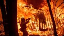 Warum in Kalifornien (immer wieder) die Flammen wüten