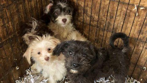 US-Polizei findet 44 tote und 130 verwahrloste Hunde in New Jersey