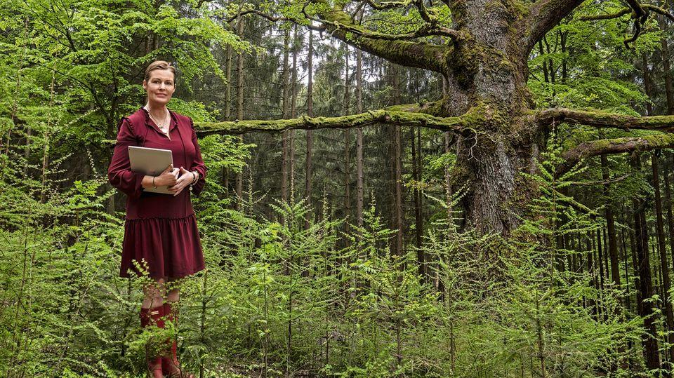 """100 Millionen Euro wären die 7000 Hektar der Familie Löwenstein-Wertheim-Rosenberg zu üblichen Preisen mindestens wert. Nur würde sie nie verkaufen. """"Der Wald gehört zur Familie"""", sagt Prinzessin Stephanie zu Löwenstein. Sie zählt zu den größten Privateigentümern."""