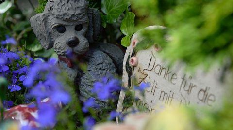 Friedhof Ohlsdorf - Hamburg - Gräber Mensch Haustier