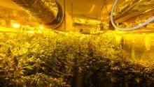 Marihuana-Plantage in Tiefgarage