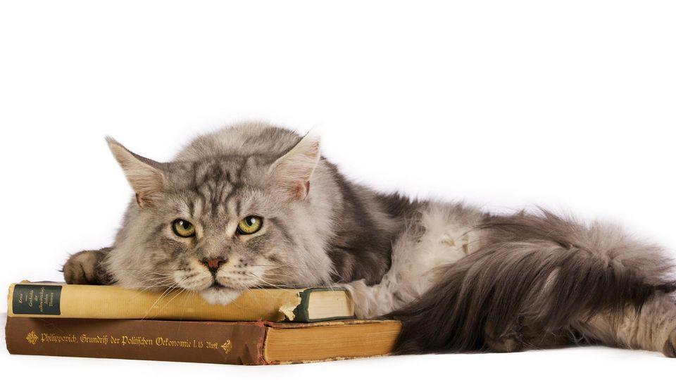Eine Katze liegt auf einem Stapel alter Bücher