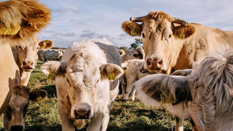 Fleisch ist verführerisch lecker – doch zuviel davon schadet
