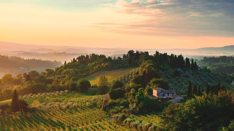 Für natives Olivenöl geben die Verbraucher gern etwas mehr aus - daher panscht die Agrar-Mafia das teure Öl.
