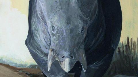 Mehr Masse bedeutet auch mehr Schutz -Lisowicia bojani war so groß wie ein Elefant.