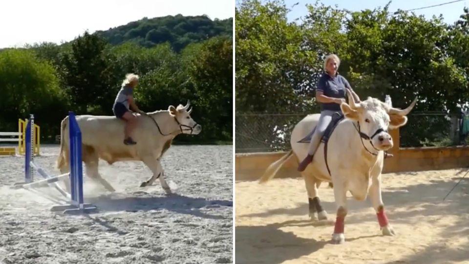 Aston ist kein normaler Bulle: Er denkt, er wäre ein Pferd