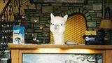 """Der """"Better Living With Alpacas Calendar 2019"""" vonFotograf Daniel Gebhart de Koekkoek ist vomNew Yorker Magazin """"Office"""" veröffentlicht worden. Er ist für15 Euro hier erhältlich."""
