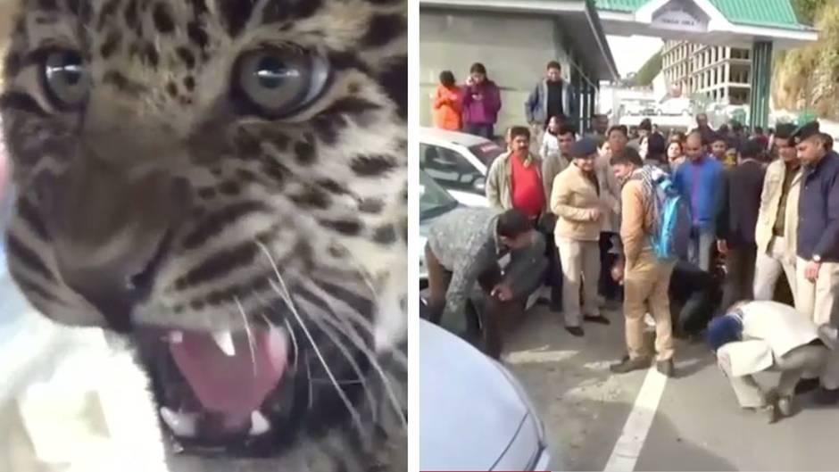 Indien: Kleiner Leopard verirrt sich in die Stadt und sorgt für Aufruhr
