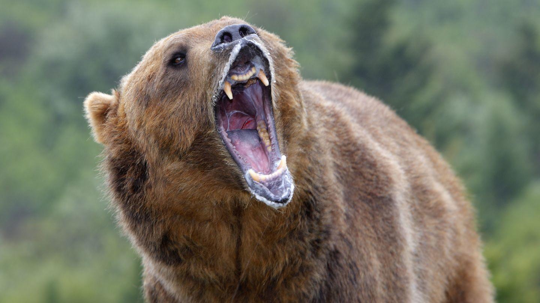 Ein Grizzlybär wie dieser hier tötete die Mutter und ihr Kind in Kanada. Der Vater erschoss das Tier.