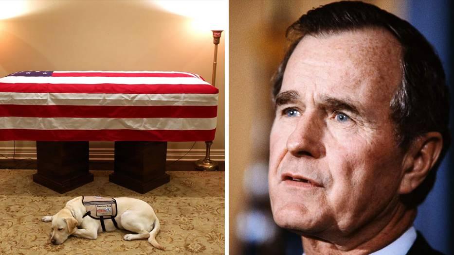 Trauer um Ex-Präsidenten: Treuer Begleiter bis zum Schluss: Hund von George H. W. Bush erweist ihm die letzte Ehre