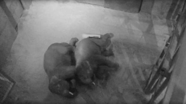"""Zoo von Denver: Elefanten kuscheln in """"Löffelchen-Stellung"""" – der Grund ist bezaubernd"""