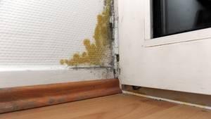 Ein Schimmelfleck ist an einer Balkontür zu sehen. Dieser Schimmel ist real. In dem Verfahren ging es dagegen um Wohnungen, in denen Schimmelauftreten könnte.
