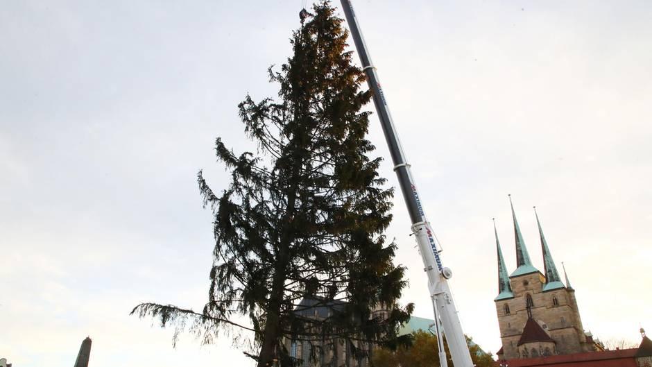 Weihnachtsbaum Herkunft.Erfurt So Gewann Ein Kahler Weihnachtsbaum Die Herzen Der Menschen