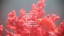 LIving Coral heißt die neue Farbe des Jahres
