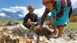 Der Wolle geht die (natürliche) Farbe aus   Nicht nur die Hirten in Gatlang haben ihre Wolle bisher traditionell mit pflanzlichen Farben gefärbt. Nun fehlen die Pflanzen bzw. das Wachstum hat dramatisch abgenommen, sodass sich die Suche kaum noch lohnt. Die Farben werden mittlerweile in Kathmandu als chemische Produkte gekauft. Damit geht eine lange Tradition zu Ende.