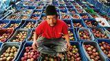 Neue Heimat für Fuji, Golden Delicious und Kiwi   In Bhratang, gelegen am Annapurna Circuit nahe Manang, der beliebtesten Trekking-Route Nepals, entstand eine der größten asiatischen Apfelplantagen der Firma Agro Manang. Aufgrund der steigenden Temperaturen ziehen sich die Plantagen jedoch immer höher die Himalaya-Hänge hinauf, inzwischen bereits über 3600 Metern Höhe. Selbst im extrem trockenen, ehemaligen Königreich Mustang, werden (nicht mehr nur) Äpfel angepflanzt. In vielen Regionen wurde mit dem Anbau von Kiwis begonnen. Weitere Folge der steigenden Temperaturen: Viele Haushalte in Mustang benötigen im Sommer nun Moskitonetze, denn Mücken sind zur Plage geworden, obwohl sie vor einigen Jahren hier noch gänzlich unbekannt waren.