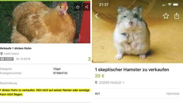 """Mit """"1 dicken Huhn"""" fing alles an. Aber auch Olaf, der skeptische Hamster begeisterte das Netz."""