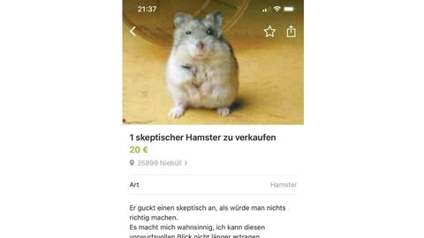 Der Troll und seine Quatsch-Inserate: Wieso der skeptische Hamster Olaf zum Star im Netz wurde