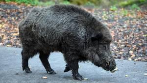 nachrichten deutschland - wildschwein parkplatz