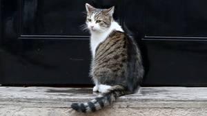Missverständnisse zwischen Katze und Mensch