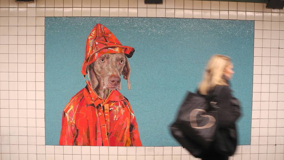 Bilder des Künstler William Wegman in der New Yorker U-Bahn-Station