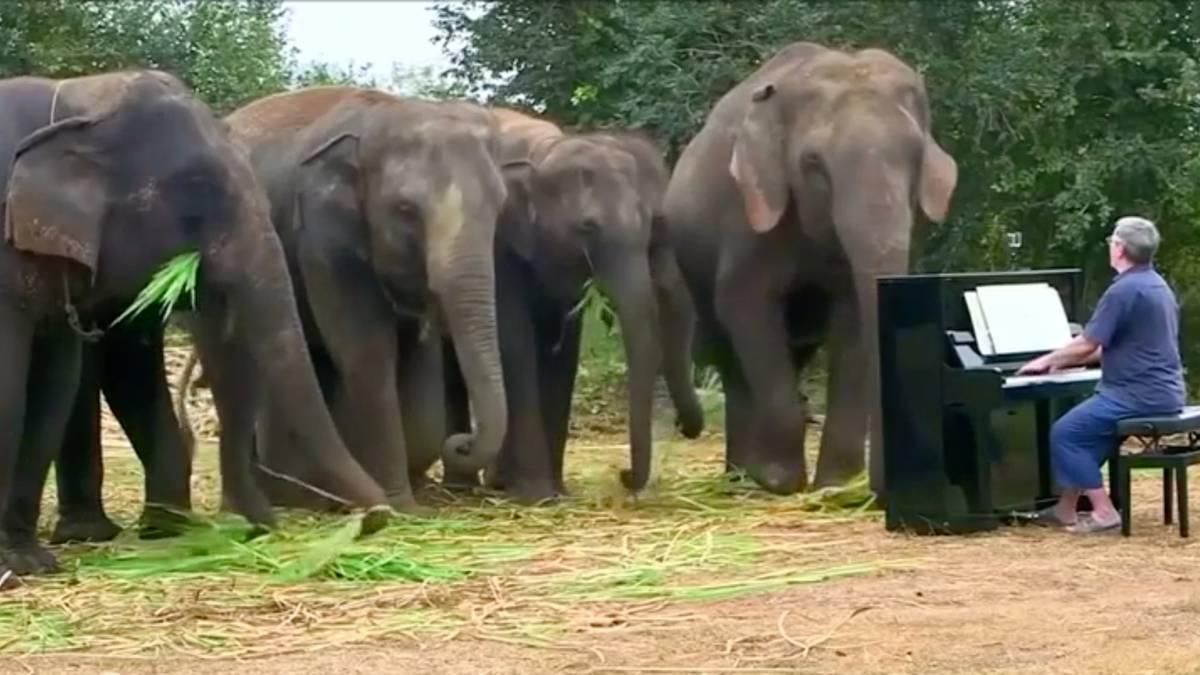 Klassik für Dickhäuter: Musik tut der Seele gut – das gilt auch für diese traumatisierten Elefanten