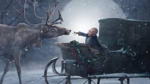 Ein kleiner Junge sitzt in einer Kutsche und streckt seine Hand einem Rentier entgegegen