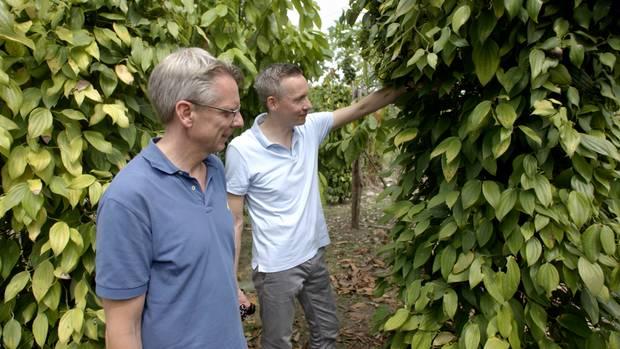 Geschäftsführer Nils Meyer-Pries (links) und Marketingchef Jan Plambeck auf einem Pfefferfeld in Brasilien.