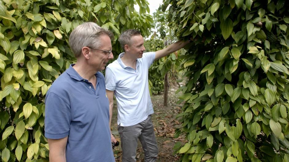 Geschäftsführer Nils Meyer-Pries (links) und Marketingchef Jan Plambeck auf einem Pfefferfeld in Brasilien - Einblick hinter die Kulissen der Gewürzbranche.