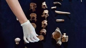 Die sterblichen Überreste des Fürsten von Helmsdorf