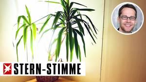 Der Autor verspricht die gemobbste Palme, nach Silvester zurückzugeben