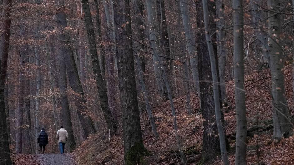 Wald mit Spaziergängern