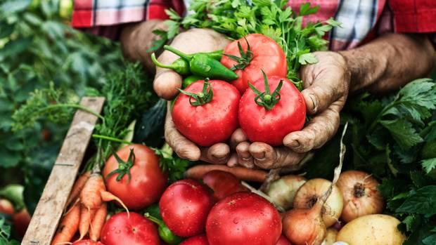 Ein Gärtner hält verschiedene Gemüse in der Hand