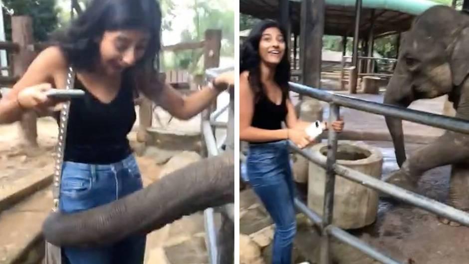 Dreister Überfall: Frecher Elefant klaut Handtasche - der Inhalt ist einfach unwiderstehlich
