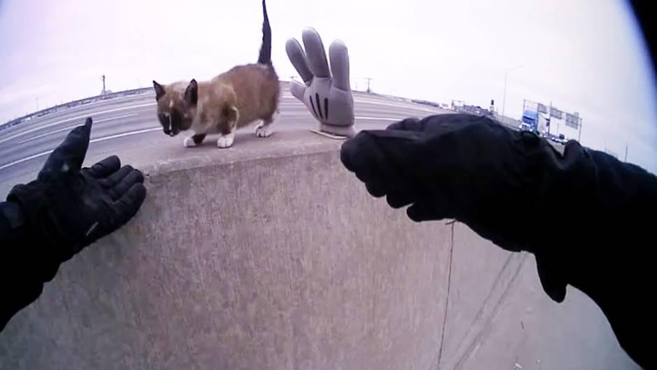 Missouri: Polizist rettet Kätzchen von Autobahn – und beweist dann ein noch viel größeres Herz