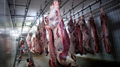 Halal-zertifiziertes Rindfleisch in einem Schlachthof