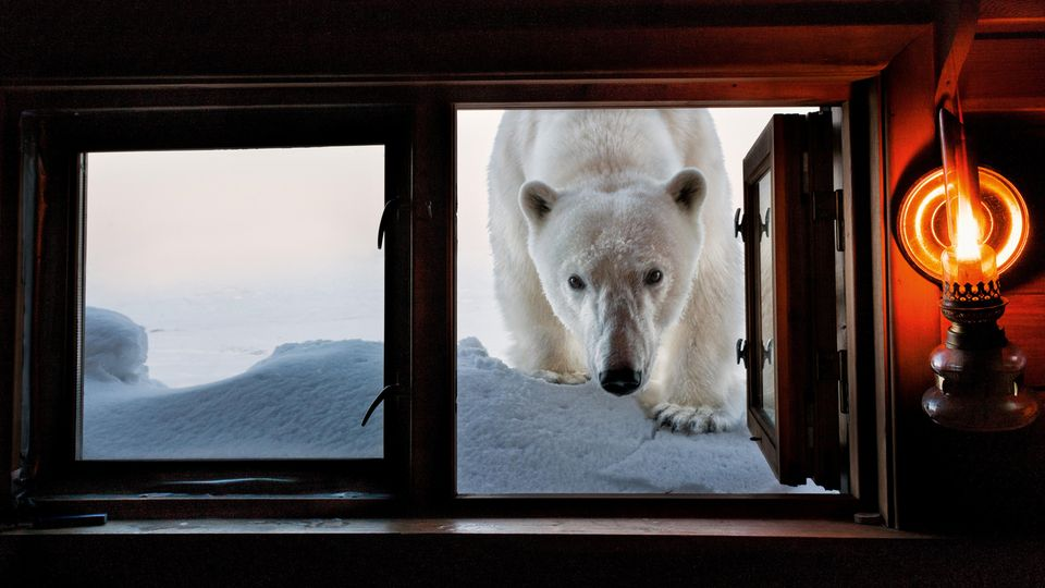 Hereinspaziert? Nicht ganz. Die Tür ließ Paul Nicklen in Svalbard, Norwegen, dann doch besser geschlossen.