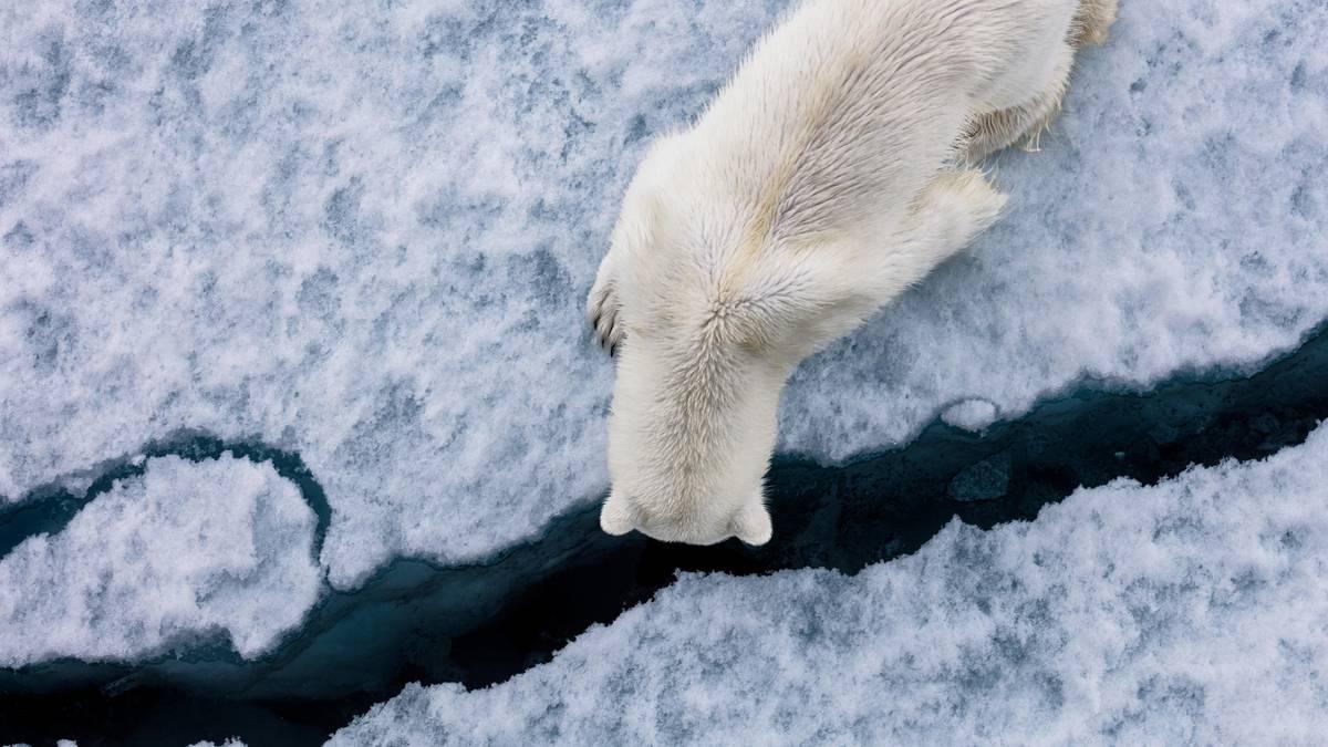 Schmelzendes Idyll: In eiskalten Regionen: Die bärenstarken Bilder des Naturfotografen Paul Nicklen