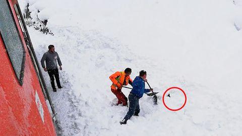 ÖBB: Bahn-Mitarbeiter in Österreich retten Gams aus Schneemassen und werden zu Helden