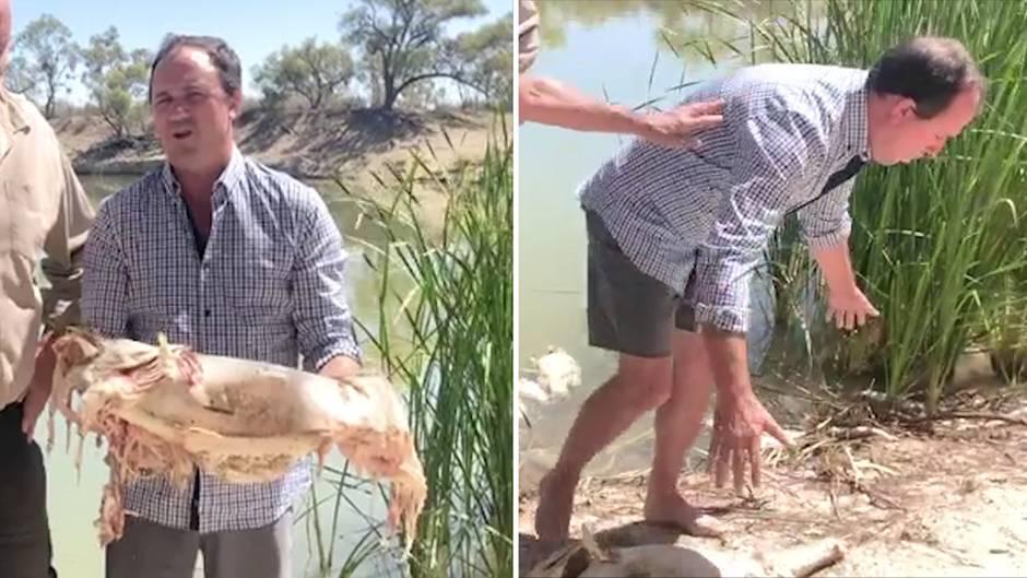 Fischsterben in Australien: Politiker übergibt sich von Fischgestank – doch dieses virale Video hat einen ernsten Hintergrund