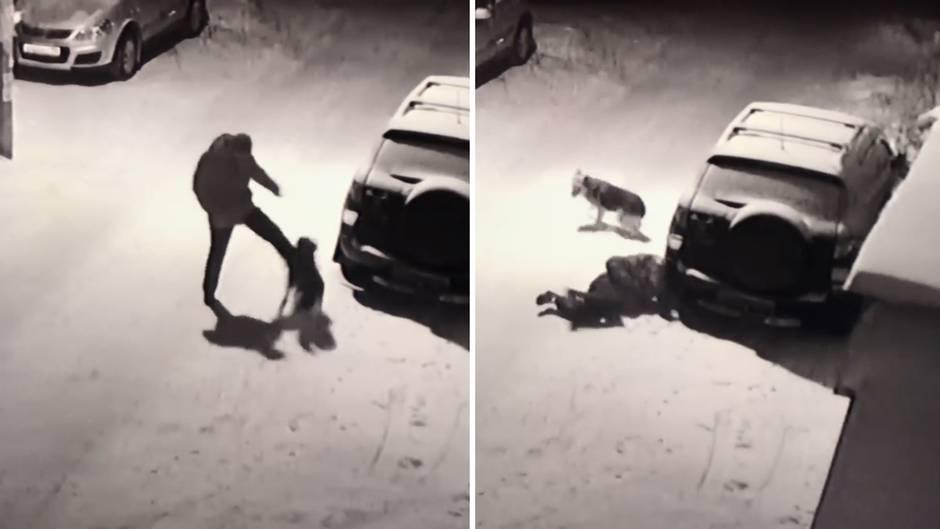 Schmerzhafte Lektion: Mann tritt Hund – dann schlägt das Karma zurück