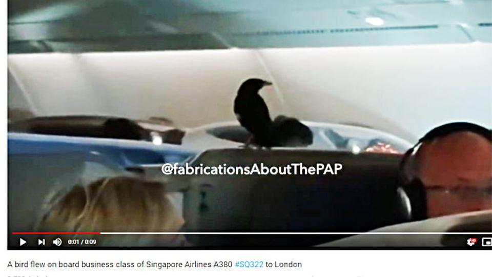 Beo an Bord: Blinder Passagier im A380: Ein Vogel fliegt Business Class nach London