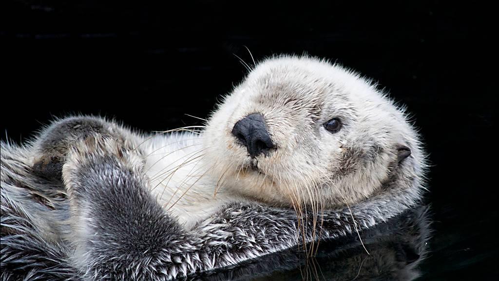 Tierfotografie: Einfach niedlich: Elf Otter-Bilder, die für gute Laune sorgen