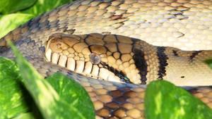 Bei der Schlange hat es sich wohl um eine solcheAmethyst-Python gehandelt