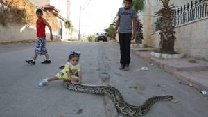 Kind mit Python