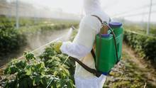Ein Landwirt besprüht seine Pflanzen mit Pestiziden